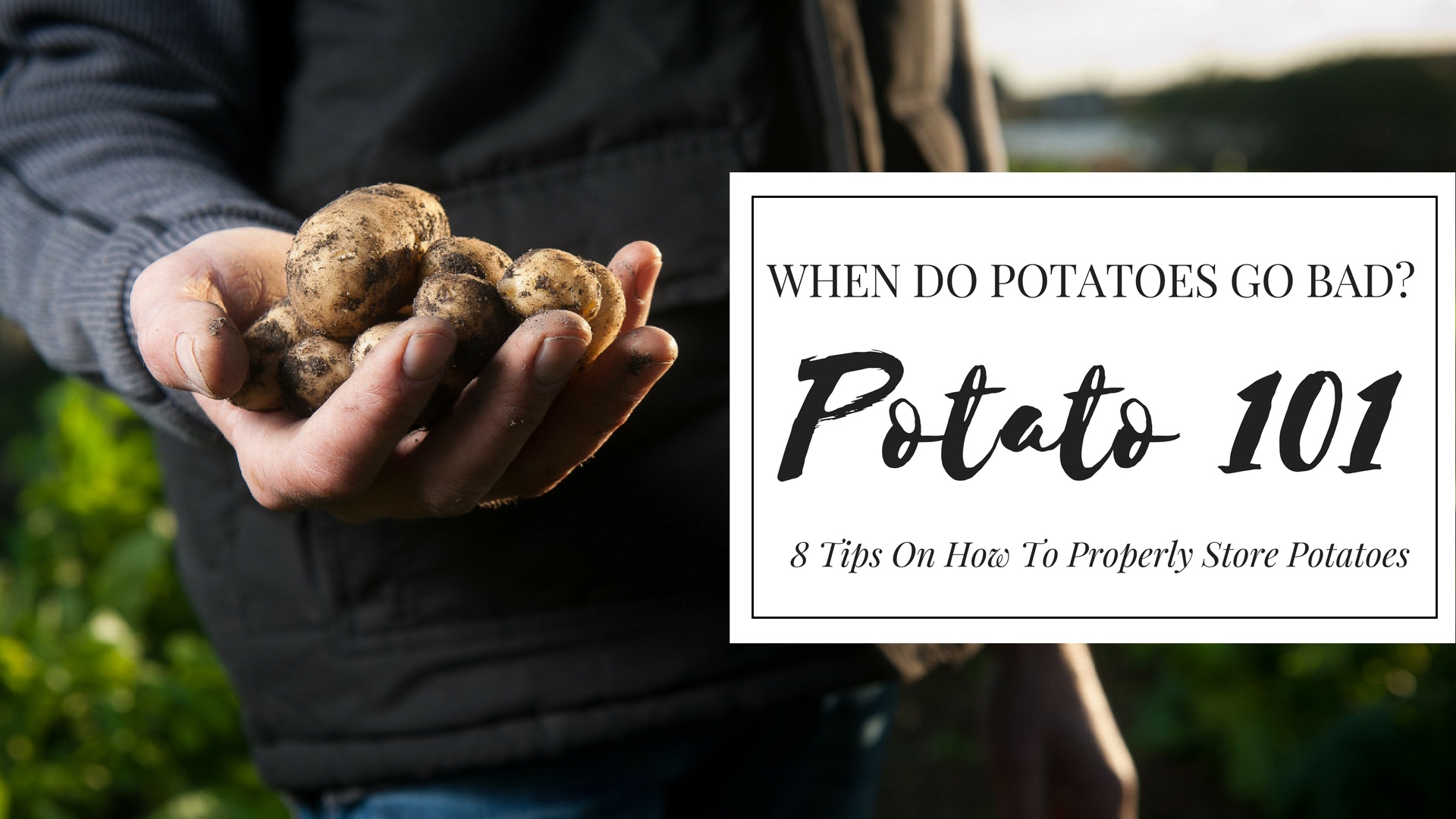When do potatoes go bad? Is it bad when it's soft and sprouting? Find out the signs of bad potatoes and tips on how to properly store potatoes.